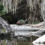 Poor Turtle